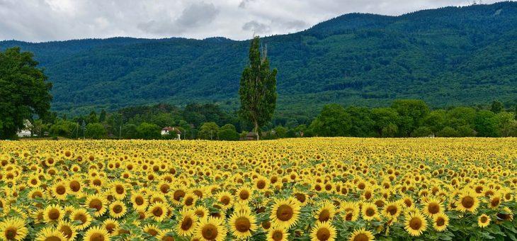 Tutta Bientina in un post: i tanti volti di un paese che cresce.